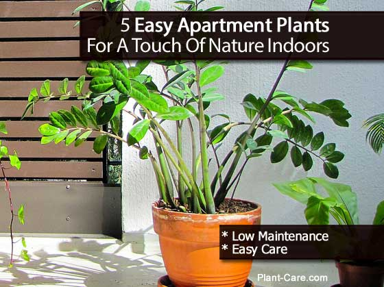 apartment-plants-102213